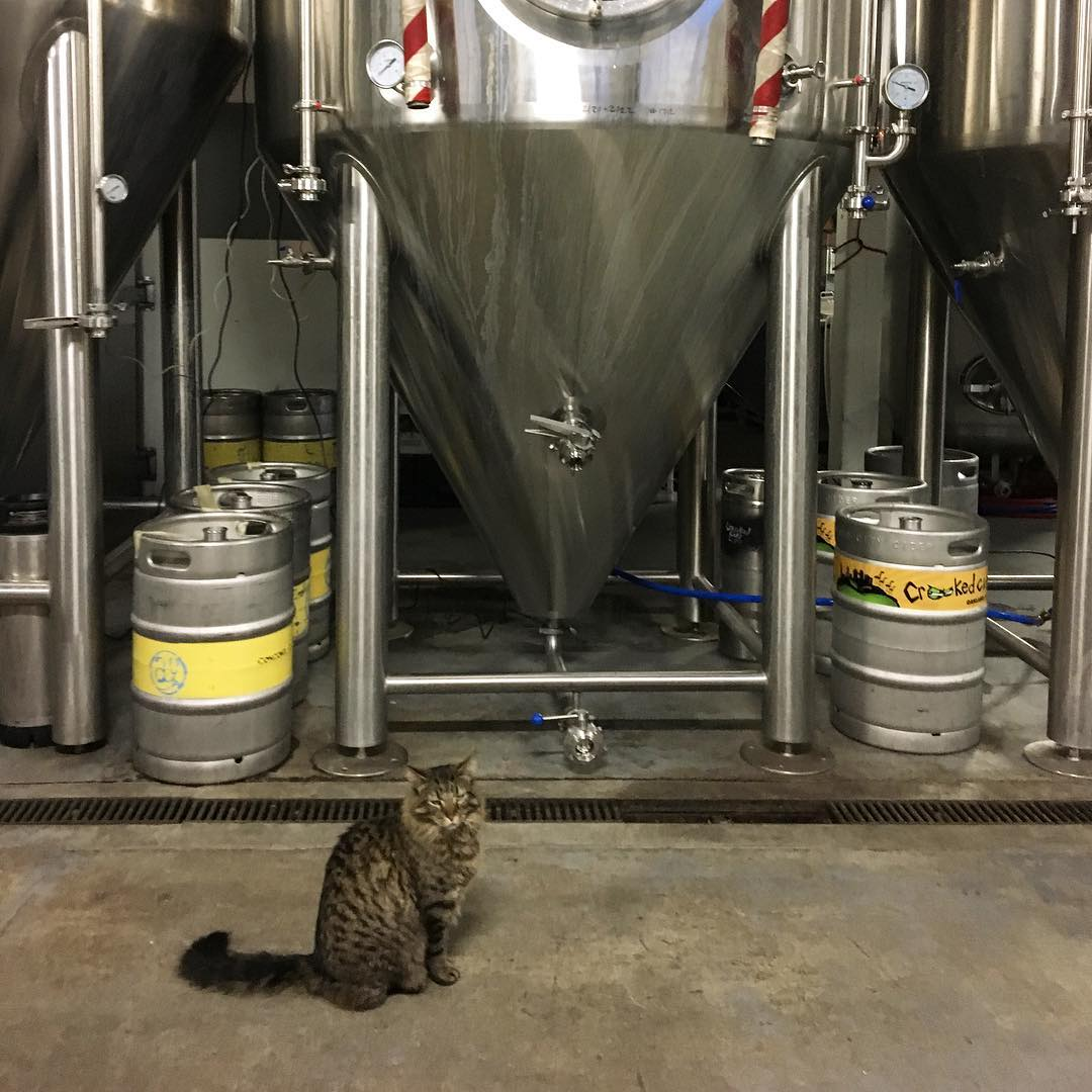 Check out this handsome hunk.😍 His name is Porter, and he does pretty much whatever he wants. #brewcat #aleindustries #craftbeer #meow #beer #brewery #cats #mybeeryear #Oakland #beergeek #cicerone