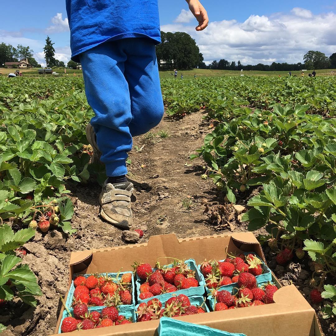 Strawberry picking with my favorite dude. #sauvieisland #oregon