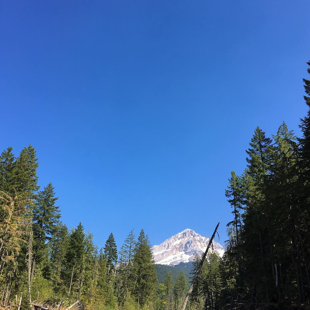 Mount Hood is looking naked at the end of this hot summer and XX years of climate change. The glaciers are receding. #volcanovibes #climatechange