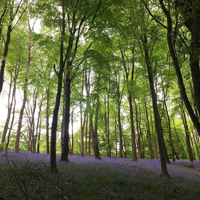 Went on a gorgeous run yesterday in Bristol through a forest filled with bluebells and wild garlic. Just counteracting the massive amounts of beer I've been consuming! The UK has been so good to me. 🇬🇧